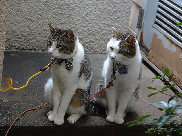 Yuki & Hoshi, #2137