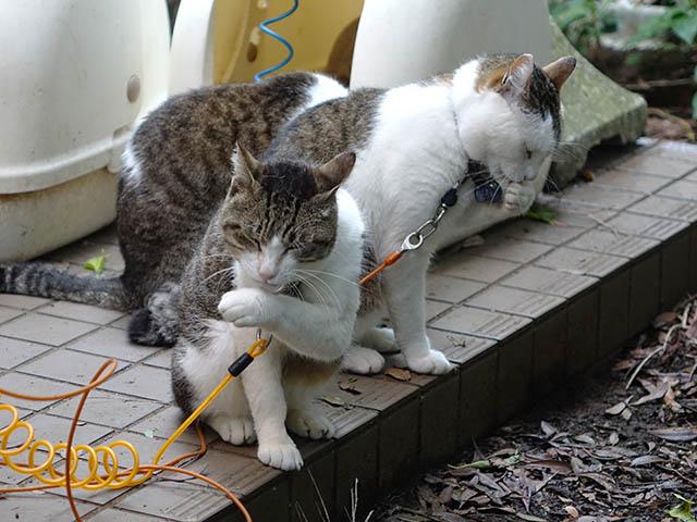 Yuki, Koyuki & Hoshi, #2145