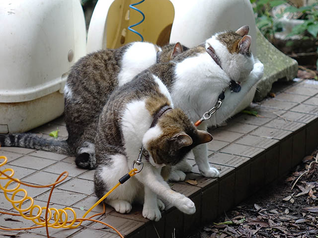 Yuki, Koyuki & Hoshi, #2148