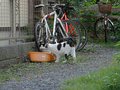 Local Cats, #0102