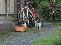 Local Cats, #0103