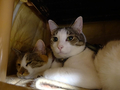 Umi & Hana, #2289