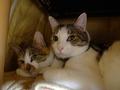 Umi & Hana, #2290