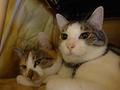 Umi & Hana, #2291
