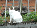 Cats of Houtong, #0067 (Closeup)