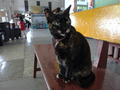 Cats of Houtong, #2346