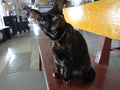Cats of Houtong, #2348