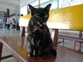 Cats of Houtong, #2355