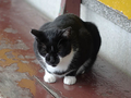 Cats of Houtong, #2360