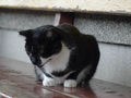 Cats of Houtong, #2362