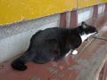 Cats of Houtong, #2364