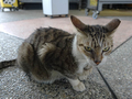 Cats of Houtong, #2369