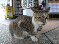 Cats of Houtong, #2370
