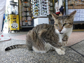 Cats of Houtong, #2371
