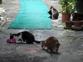 Cats of Houtong, #2443