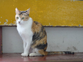Cats of Houtong, #2598