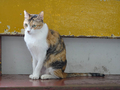 Cats of Houtong, #2599