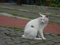 Cats of Houtong, #2705