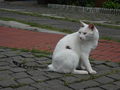 Cats of Houtong, #2706