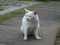 Cats of Houtong, #2711