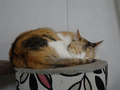 Cats of Houtong, #2734