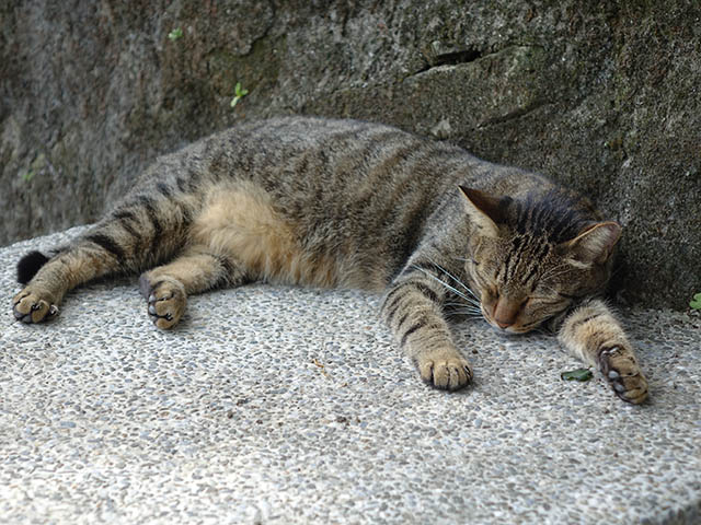 Cats of Houtong, #2740