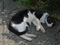 Cats of Houtong, #2742