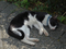 Cats of Houtong, #2743