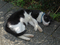 Cats of Houtong, #2744