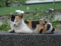 Cats of Houtong, #2745