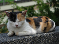 Cats of Houtong, #2746