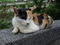 Cats of Houtong, #2747