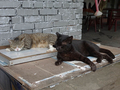 Cats of Houtong, #2749