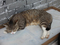 Cats of Houtong, #2753