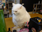 Cats of Houtong, 小白@217Cafe, #2804