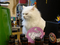 Cats of Houtong, 小白@217Cafe, #2805
