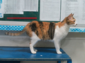 Cats of Houtong, #2243