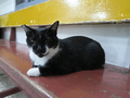 Cats of Houtong, #2245