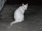 Cats of Jingtong, #0144