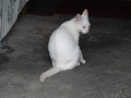 Cats of Jingtong, #0147