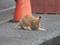 Cats of Shifen, #0181 (Closeup)