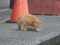 Cats of Shifen, #0182 (Closeup)