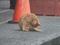 Cats of Shifen, #0183 (Closeup)