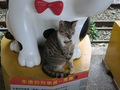 Cats of Houtong, #2450
