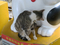 Cats of Houtong, #2452