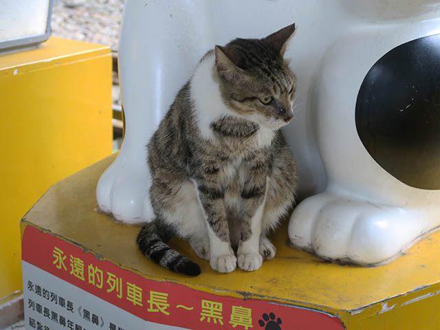 Cats of Houtong, #2453