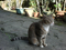 Cats of Houtong, #3193