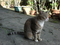 Cats of Houtong, #3194