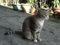 Cats of Houtong, #3195