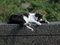 Cats of Houtong, #3208